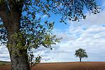 Europa, DEU, Deutschland, Nordrhein Westfalen, Niederrhein, Wachtendonk, Typische Landschaft.  Kategorien und Themen, Natur, Umwelt, Landschaft, Jahreszeiten, Stimmungen, Landschaftsfotografie, Landschaften, Landschaftsphoto, Landschaftsphotographie, Wetter, Wetterelemente, Wetterlage, Wetterkunde, Witterung, Witterungsbedingungen, Wettererscheinungen, Meteorologie, Wettervorhersage<br /> <br /> [Fuer die Nutzung gelten die jeweils gueltigen Allgemeinen Liefer-und Geschaeftsbedingungen. Nutzung nur gegen Verwendungsmeldung und Nachweis. Download der AGB unter http://www.image-box.com oder werden auf Anfrage zugesendet. Freigabe ist vorher erforderlich. Jede Nutzung des Fotos ist honorarpflichtig gemaess derzeit gueltiger MFM Liste - Kontakt, Uwe Schmid-Fotografie, Duisburg, Tel. (+49).2065.677997, archiv@image-box.com, www.image-box.com]