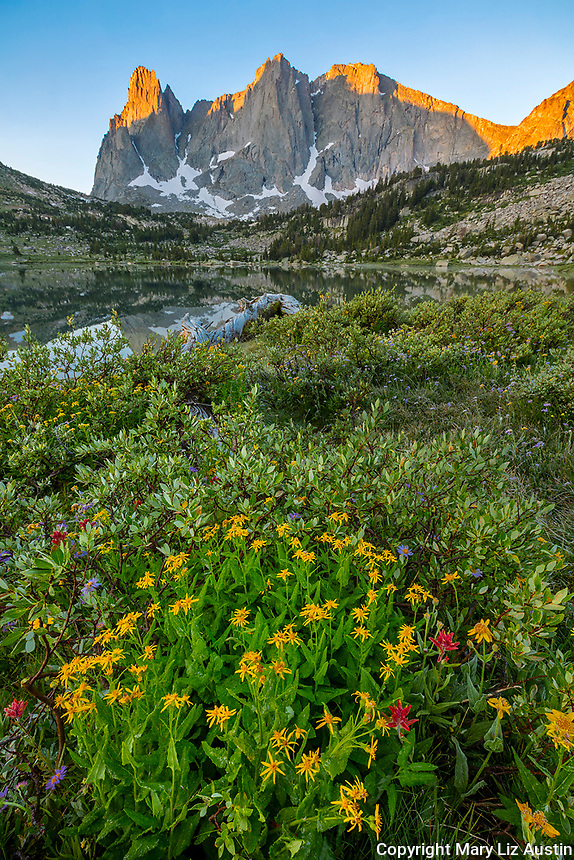 Wind River Range, WY: Yellow flowering groundsel, red paintbrush and purple asters blooming among low growing willows next to Lonesome with sunrise light on Warrior Peaks and War Bonnet in the Cirque of the Towers; Bridger Wilderness in the Bridger National Forest