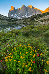 Wind River Range, WY: Yellow flowering groundsel, red paintbrush and purple asters blooming among low growing willows next to Lonesome with sunrise light on Warrior Peaks and War Bonnet in the Cirque of the Towers; Popo Agie Wilderness in the Bridger National Forest