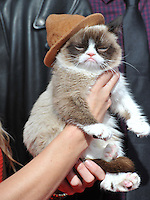 Grumpy Cat at the 2014 MTV Movie Awards at the Nokia Theatre LA Live.<br /> April 13, 2014  Los Angeles, CA<br /> Picture: Paul Smith / Featureflash