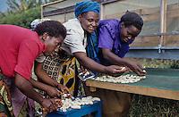 Farmer using solar dryer to dry banana for the Market