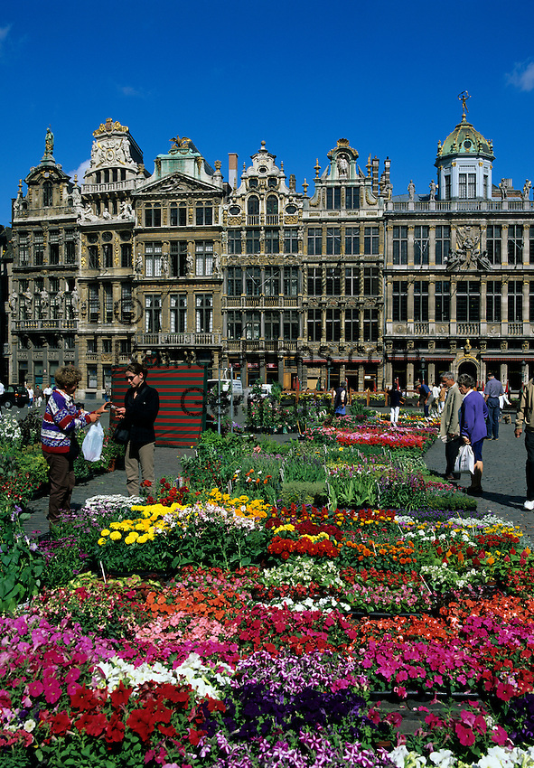 Belgium, Province Brabant, Brussels: Flower market in the Grand Place with the Guild Halls | Belgien, Provinz Brabant, Bruessel: Blumenmarkt auf dem Grand Place (Grote Markt) mit den Zunfthaeusern