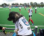 HUIZEN  -  mascotte hond Paco,    , hoofdklasse competitiewedstrijd hockey dames, Huizen-Groningen (1-1)   COPYRIGHT  KOEN SUYK