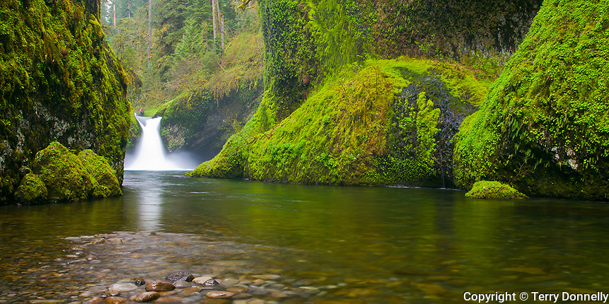 Columbia Gorge National Scenic Area, OR<br /> Punchbowl Falls on Eagle Creek in moss &amp; fern covered basalt gorge, Mt. Hood National Forest