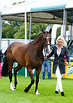 30th August 2017. Georgie Spence (GBR) riding Wii Limbo during the First Horse Inspection of the 2017 Burghley Horse Trials, Stamford, United Kingdom. Jonathan Clarke/JPC Images