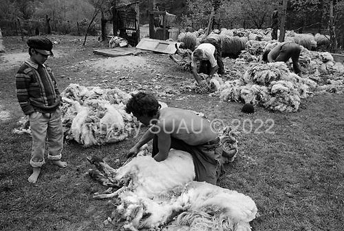 Lainici, Walachia<br /> Romania<br /> May 6, 1992<br /> <br /> Shearing sheep