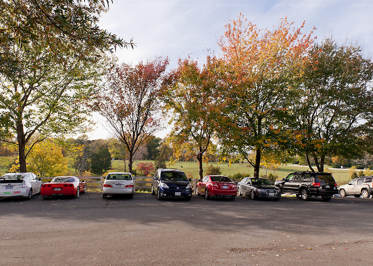 On a busy day, cars line the shaded drive leading to the winery at Barboursville Vineyards.