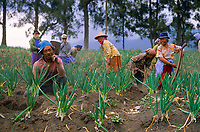 Farmers on Mount Bromo, Java, Indonesia, 2002