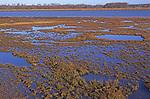 A07WT1 Marshy wetland habitat at high tide Butley Creek river Suffolk England