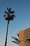 Israel, Tel Aviv-Yafo. Gan Hapisga in Jaffa