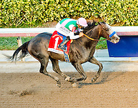 HALLANDALE BEACH, FL - JAN 28: Arrogate #1, ridden by Mike Smith, wins the $12,000,000 Pegasus World Cup Invitational the Pegasus World Cup Invitational Day at Gulfstream Park Race Course on January 28, 2017 in Hallandale Beach, Florida. (Photo by Scott Serio/Eclipse Sportswire/Getty Images)