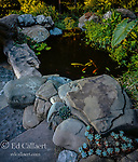Koi Pond, Fern Canyon Garden, Mill Valley, California