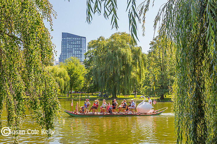 Swan Boats in the Boston Public Garden, Boston, Massachusetts, USA