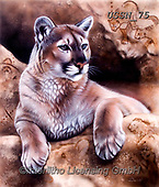 Sandi, REALISTIC ANIMALS, REALISTISCHE TIERE, ANIMALES REALISTICOS, paintings+++++TheSourcecougar,USSN75,#a#, EVERYDAY ,puzzles