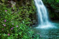 Opai Pilau Falls and wildflowers. Hawaii, the big island.