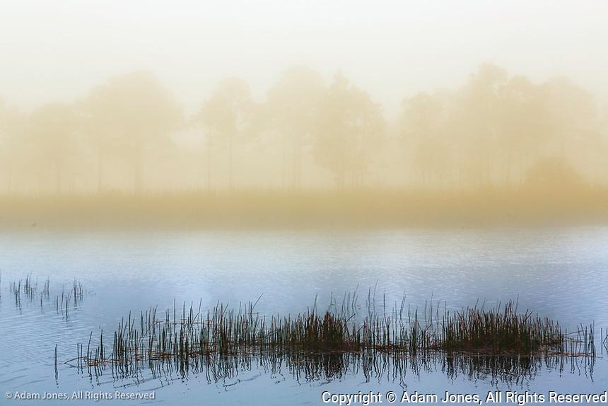 Fred C.Babcock/Cecil M. Webb Wildlife Management area at sunrise on foggy morning, Punta Gorda, FloridaLive oaks draped in Spanish moss at sunrise, Circle B Bar Reserve, Polk County, near Lakeland, Florida
