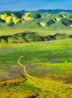 Road through wildflowers. Carrizo Plain National Monument, California