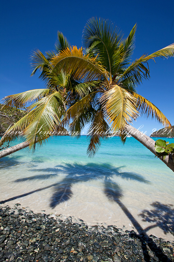 Maho Bay Beach<br /> with palms <br /> Virgin Islands National Park<br /> St. John, U.S. Virgin Islands