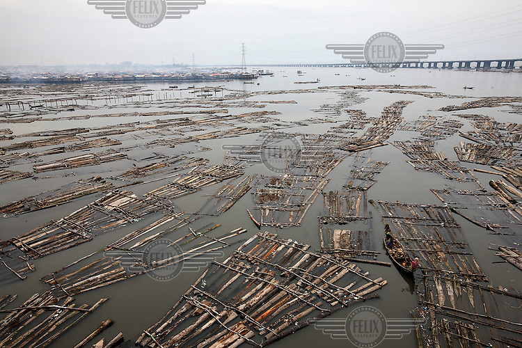 A raft of timber floating in Lagos Lagoon prior to be taken to a saw mill in Makoko.