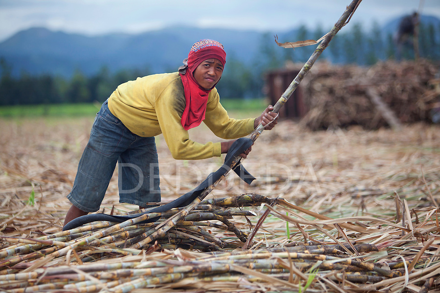 A young field worker harvests sugar cane in a field near Bias City on Negros Oriental, Philippines.