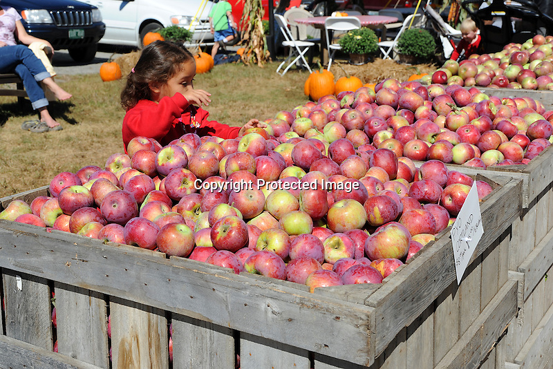 Young Girl Picking out an Apple at the Orchard, New Hampshire