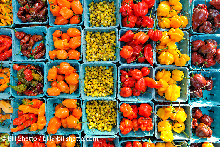 Assorted chili peppers for sale at New York City's Union Square green market.