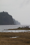 Puget Sound, Hood Canal, Hamma Hamma River estuary, rain, winter, Olympic Mountains, Olympic Peninsula, Washington State, Pacific Northwest, USA,