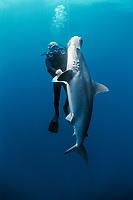 Diver examining hooked Scalloped Hammerhead Shark, Sphyma lewini, . Cocos Island, Costa Rica - Pacific Ocean