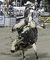 "29 August, 2004:  PRCA Rodeo Bull Rider Kyle Joslin ranked 40th in the world riding ""Magic"" during the PRCA 2004 Extreme Bulls competition in Bremerton, WA."