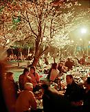 JAPAN, Kyushu, people picnicking under cherry blossom trees, Cherry Blossom Festival