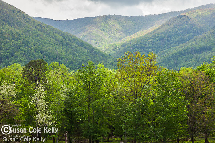 A clearing storm in the mountains surrounding Cades Cove, Great Smoky Mountains National Park, TN, USA