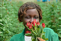 KENYA Thika near Nairobi, Simbi Roses is a fair trade rose flower farm which produces rose as cutting flowers for export to europe, worker Lucy Waithira Ngunga, 44 years old / KENIA Thika bei Nairobi, Simbi Roses ist eine fairtrade zertifizierte Blumenfarm die Rosen fuer den Export nach Europa anbauen, Pflueckerin Lucy Waithira Ngunga, 44 Jahre alt