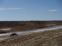 Porky and landscape at The W. Darcy McKeough Floodway, Sombra, Ontario