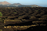 Spanien, Kanarische Inseln, Lanzarote, Weinanbau bei La Geria