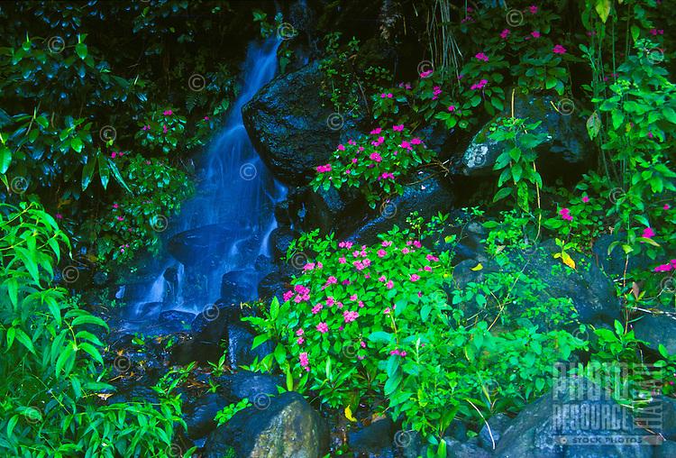 Little waterfall off the road to Hana, island of Maui