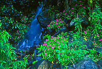 Little waterfall off the road to Hana, island of Maui