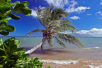 The island of Maui is visible behind this palm tree touching the ocean off Molokai, Hawaii.