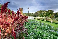 France, Indre-et-Loire (37), Montlouis-sur-Loire, jardins du château de la Bourdaisière, le potager conservatoire de la Tomate, amaranthes et phacélie
