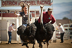 Carla Burrell, left, of Virginia City, and Shane Harrington, of Klamath Falls, Oregon race ostriches at the 51st annual International Camel Races in Virginia City, Nevada  September 12, 2010. .CREDIT: Max Whittaker for The Wall Street Journal.CAMEL
