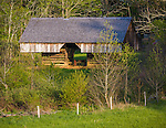Great Smoky Mts. National Park, TN/NC<br /> Cantilever barn seen amid the spring hardwood forest at &quot;The Tipton place&quot; farm site in Cades Cove