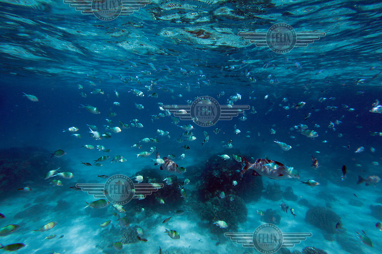 Fish and coral reef in the ocean by Similan islands, a Thai national park in the Andaman sea. Tourists who the islands by speedboats to swim and snorkel..©Fredrik Naumann/Felix Features.