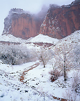 Capitol Reef National Park, UT<br /> Fresh snowfall covers cottonwoods along the Fremont River with towering cliffs of Capitol Reef in the lifting clouds