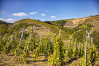 The wines in Cotes du Rhone have been produced since pre-Roman times. Most of grape cultivation is done on right side bank of terraced hills along the Rhone River. One of the very famous wines is Syrah.