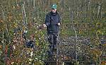 Foto: VidiPhoto<br /> <br /> DODEWAARD &ndash; De appels en peren zijn nauwelijks geplukt, of bij T&amp;G de Vree Fruit in Dodewaard worden maandag de eerste perenbomen al weer gesnoeid. En dat is uitzonderlijk vroeg, want de bomen zitten nog volop in het blad. De achttienjarige Herman de Vree concentreert zich daarom voorlopig op de boomtoppen. Daar verdwijnt het blad als eerste. Nadeel van (te) vroege snoeiwerkzaamheden is dat de knoppen die de oogst van volgend jaar geven, slecht zichbaar zijn tussen het blad. Door echter op tijd te beginnen met snoeien (snoen is groei), hoeven de telers Thomas en Herman minder personeel in te huren voor hun 17 ha. fruit. Per ha. moet er zo&rsquo;n 100 uur geknipt worden. Bovendien is snoeien een kunst apart. Iedere boom en ieder ras vereist een andere aanpak. Herman hanteert de snoeischaar vanaf zijn twaalfde jaar en mag zich inmiddels een professionele snoeier noemer.