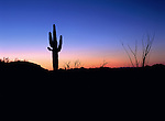 Etching the outline of the Sonoran Desert landscape, a fast falling sun on the horizon abandons its post, leaving space for night to creep in.<br /> Kofa National Wildlife Refuge, Arizona