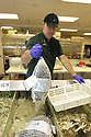 Fishmonger in the seafood department lifting a bag of shellfish from a cooler tank