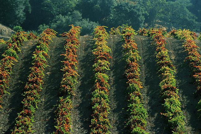 Vineyard at Rattlesnake Acres, Calistoga