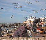 Seagulls fly overhead as men process fish by harbour wall, Essaouira, Morocco