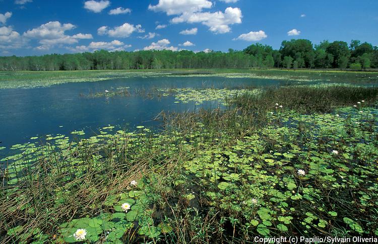 Wetlands, Kakadu National Park, Northern Territory of Australia