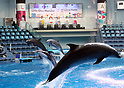 Aqua Park Shinagawa aquarium introduces new dolphin attraction